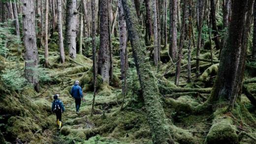 Haida Forest