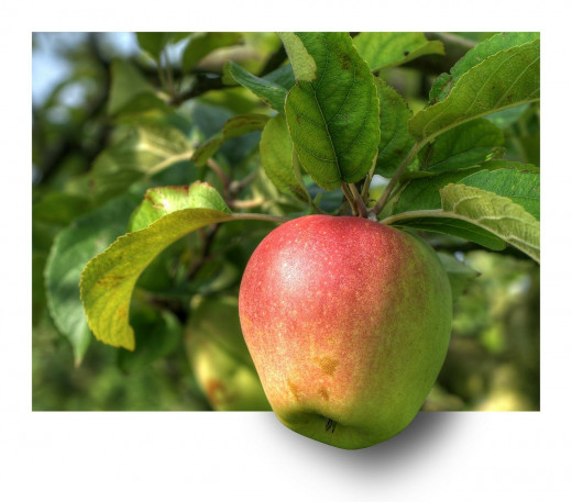That skinny apple tree you planted could surprise you, and be loved far into the future.