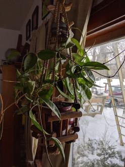 House Plant - Refreshing Potting Soil