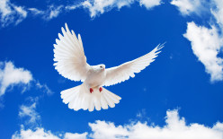 The Workings of the Holy Spirit