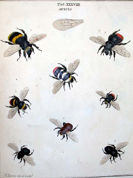 """The bee in the upper-left corner is the closest, but not a precise representation of the """"killer bee"""" drone. It was closest to a yellow jacket, but with a solid black tail and a wicked looking needle nose."""