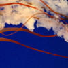 Diganta Gosh 22101999 profile image