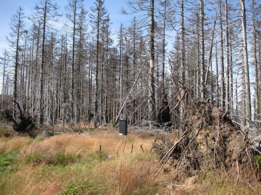 Forest dying due to acid rain