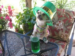The Evolving Traditions of St. Patrick's Day