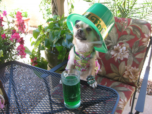 Some party goers head straight for the beer (in Milwaukee, WI they serve green beer on St. Patrick's Day)
