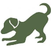 ammdog profile image