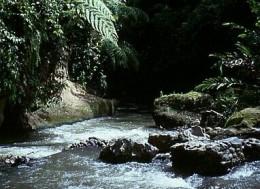 Rainforest Sumatra