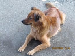 My first female dog - Pretty (see also my avatar)