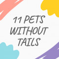 11 Pets Without Tails