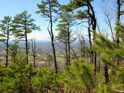 Scenes from the rerouted Grindstone Trail