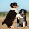 smalldogs profile image