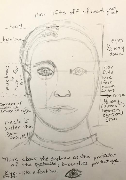 Basic human facial proportions