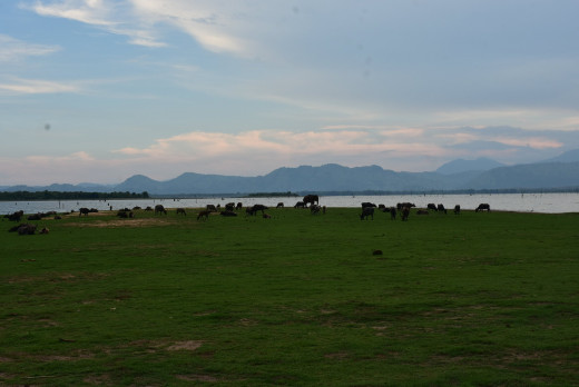 Udawalawa Reservoir