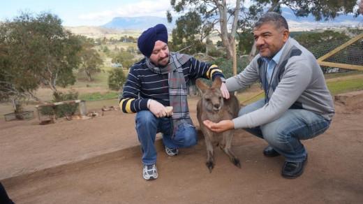 Kangroos are so friendly.