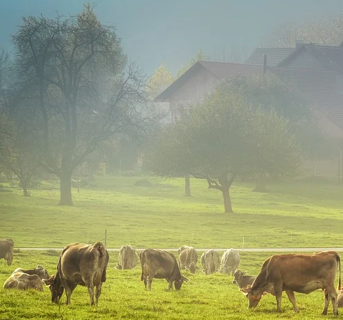 The repellent sprays I tested seemed to leave a fog lingering around. Fog is okay when it is natural. I just did not feel comfortable using in around my family and animals. I decided to pursue other options to control my livestock.