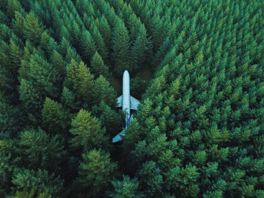 Plane in forest. Cool