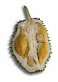 Hor Loh (Water Gourd Durian)