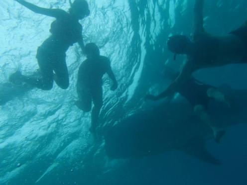 Whale watching in Oslob, Cebu