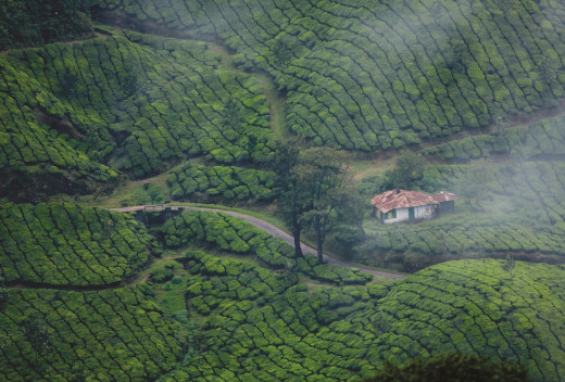 Top View of Coffee Plantations in Kerala