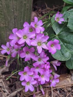 Penny Pincher: Organic Gardening Made Easier