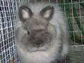 The Pet Rabbit Guide