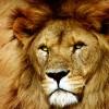 rkat profile image