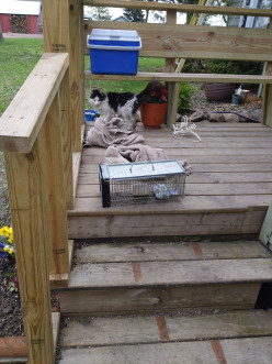 Live Trap For Squirrels Modified for Mice