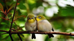 Nature and Pure Love
