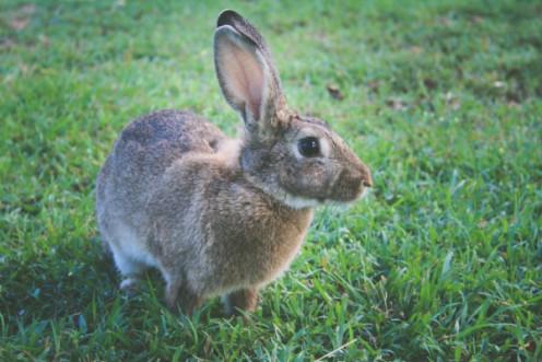 Close-up of a rabbit.