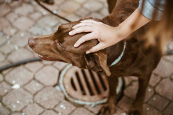 Lost a Pet? How to Deal With Your Loss