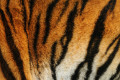 The 'Tiger King' Experience - Reading Between the Stripes