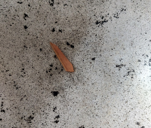 In a frying pan, take 1 inch long cinnamon.