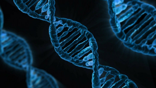 DNA transfers information from one generation to the other