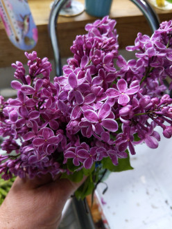 Lilac Blooms for a Welcome Home Bouquet
