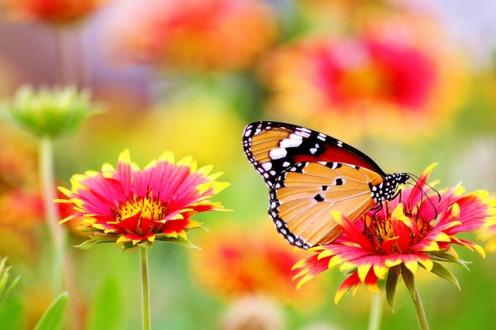 Butterfly love flowers