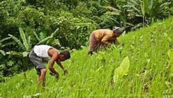 North-Eastern Indian Farming—Prospects of Organic Products Supply to World Markets