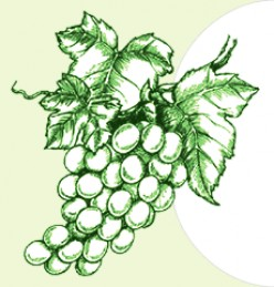 Pedro Ximenez grapes @ www.ewineasia.com