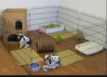 Indoor Bunny Area