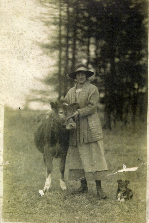 My Grandmother, Agnes Pratten circa 1922, in our field with her pet cow and little dog.  South Wonston.