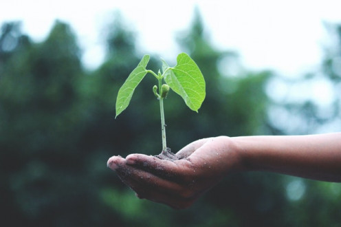 Come, let us all plant one tree today. Save the environment.