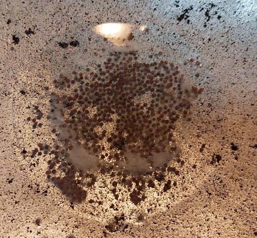 In a pan, heat oil or ghee. Splutter mustard seeds.