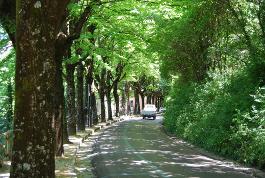 I remember walking by these beautiful green trees alongside the road.
