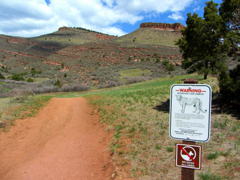 A warning sign about mountain lions in the Hall Ranch Open Space.