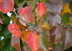 Trees in Autumn: A Seasonal Display of Splendor and Sadness