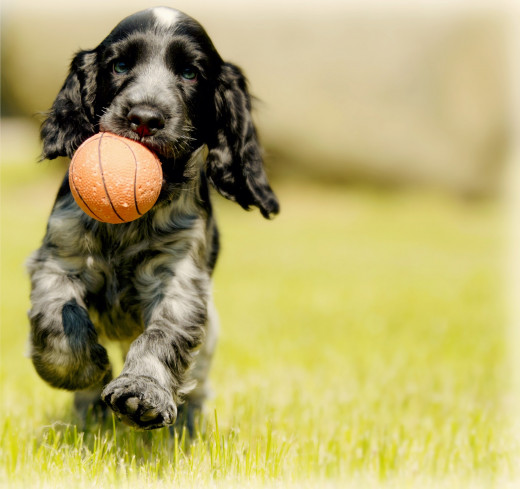 Many health problems are not obvious in puppies, but develop as they mature