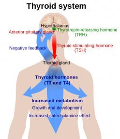 Hypothyroidism Facts