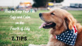 7 Tips to Keep Your Pet Safe and Calm During 4th of July Fireworks