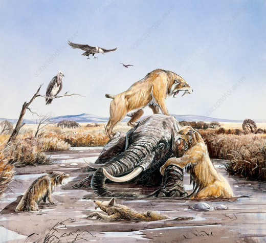 Predators Attacking In The Tar Pits