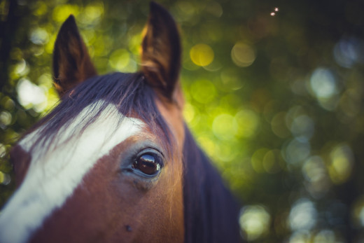 Horse - I loved the bokeh and the unexpected blurry bits!