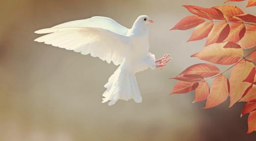 Birds Are Fly